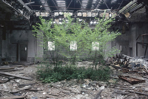 Trees appear in the modern ruin of Detroit.